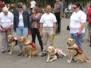 """Vakvezető kutyák világnapja 2011. \""""Fuss a vakvezető kutyákért!\"""""""