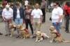 Vakvezető kutyák világnapja 2011.