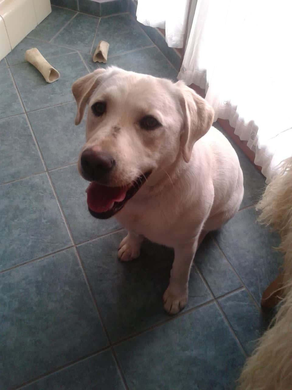 Lili kutya örökbefogadása