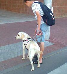 """""""Már nagyon vártam, hogy vakvezető kutyám legyen!"""""""