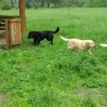 Megünnepeltük a vakvezető kutyák világnapját