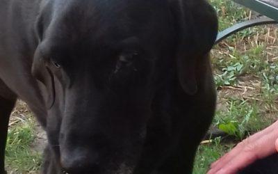 Örökbefogadót és pártfogót keresünk Aba kutyának