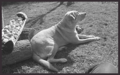 Búcsú Denisztől, a vakvezető kutyától