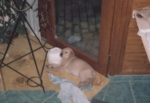 Dorisz kutya 10 éves