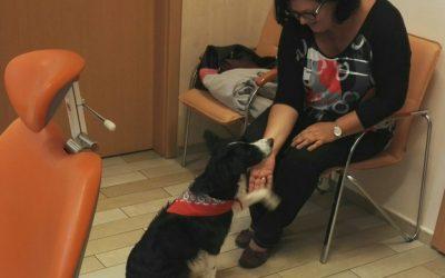 Lara az első fogászati terápiás kutya az országban