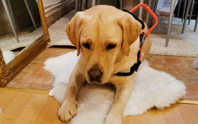 Lucy, a vakvezető kutya levizsgázott