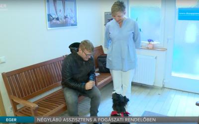 Terápiás kutya a fogászaton